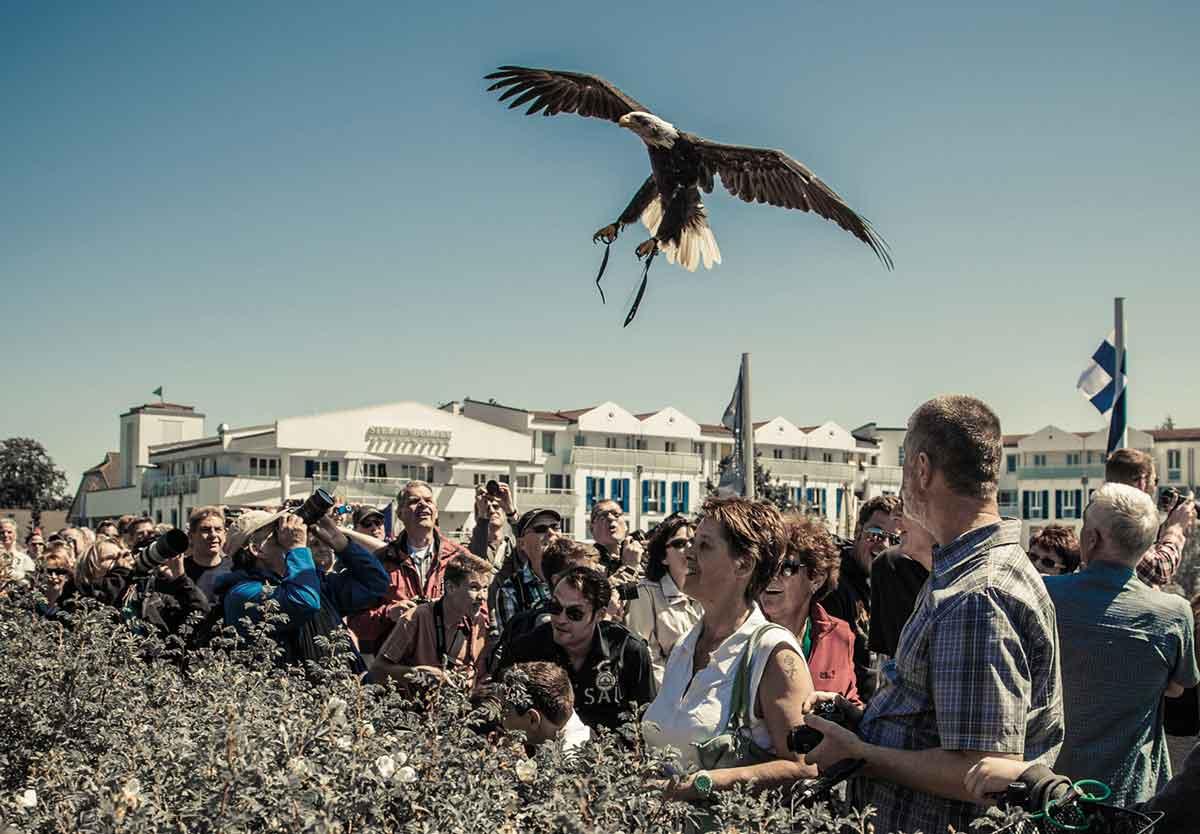 hz15_festivalevent_greifvoegelshowcanke_grossklass