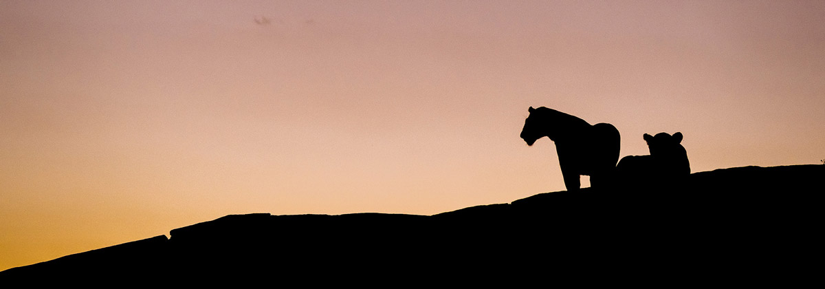 chris-schmid-sony-alpha-9-silhouetted-lions-at-black-rock-in-the-masai-mara
