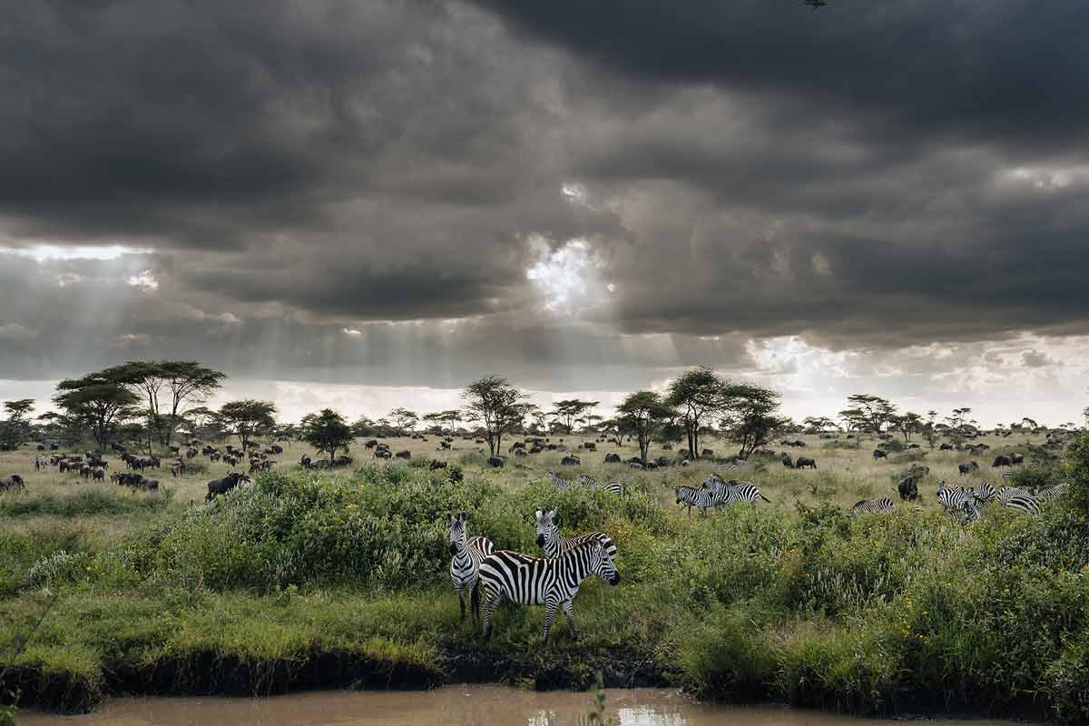 chris-schmid-sony-alpha-9-zebras-gathering-by-drinking-pool