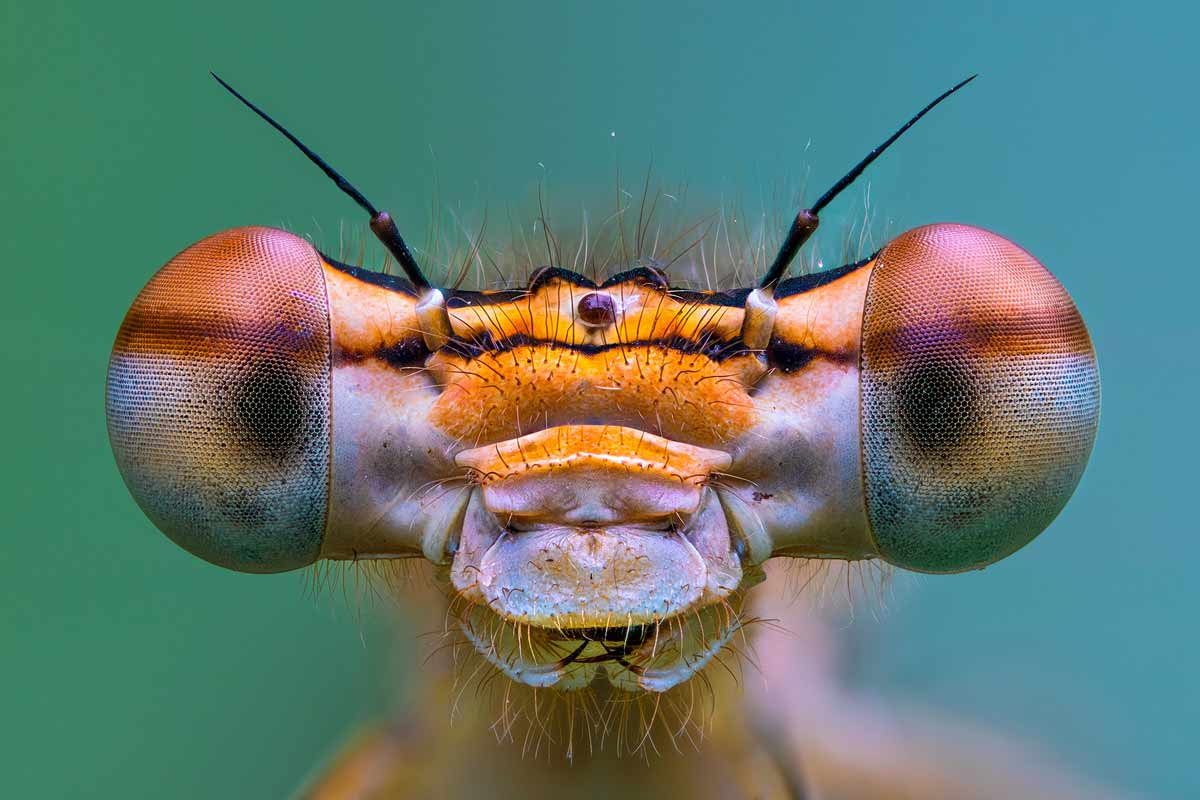 petar-sabol-sony-alpha-7RIII-extreme-close-up-of-an-insect-face