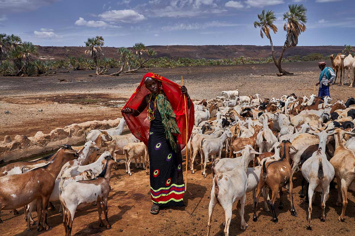 tomasz-tomaszewski-sony-alpha-7RM3-young-kenyan-girl-with-a-red-shawl-over-her-head-leading-a-herd-of-goats